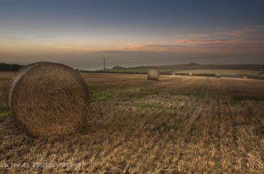 Fiction: The Last Harvest