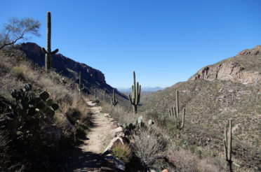 Arizona Hiking – Sabino Canyon and Pinnacle Peak