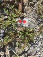 Trail markers, Portofino, Italy
