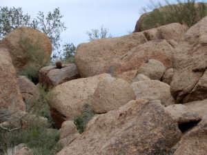 A determined cactus, Arizona