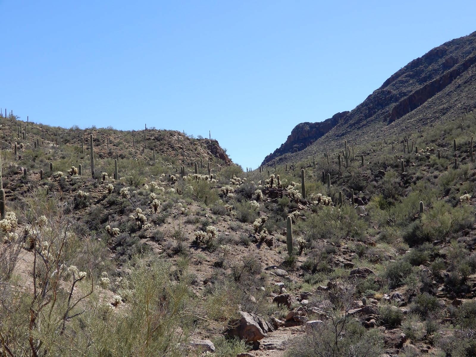 Cactus view - acres in Arizona