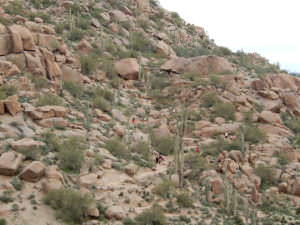 Lovely desert, Arizona
