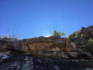 Sabino Canyon Beauty